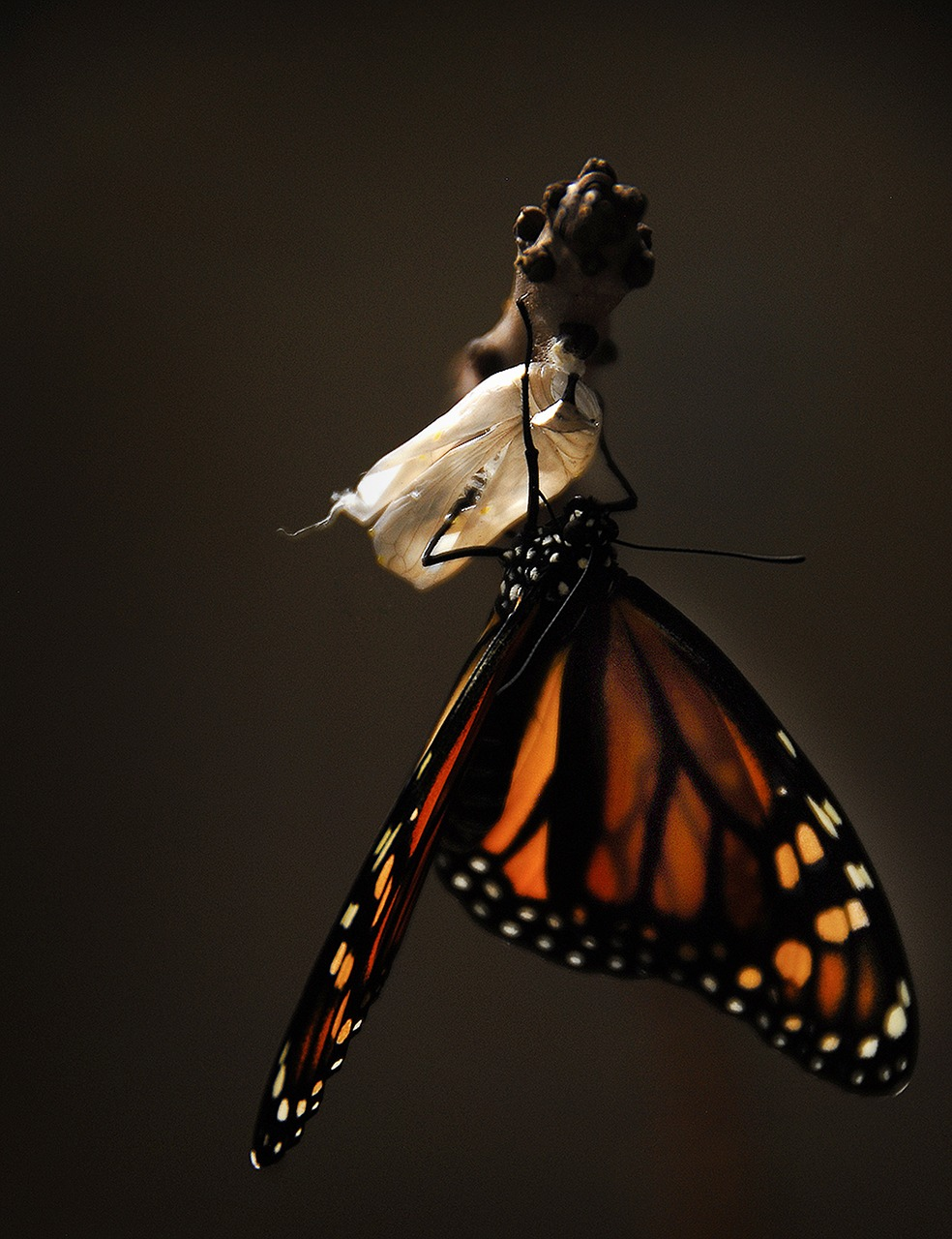 image of a butterfly to illustrate the Kaizen method