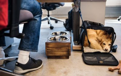 Cool new ways of working: Take your dog to the office!